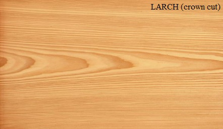 Larch crown wood veneer